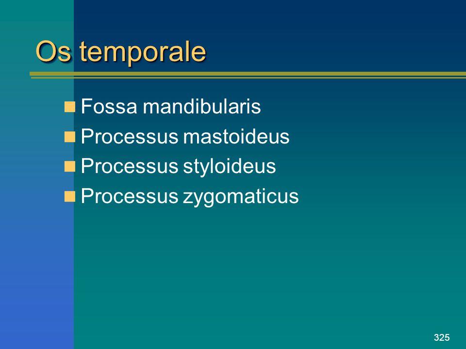 325 Os temporale Fossa mandibularis Processus mastoideus Processus styloideus Processus zygomaticus