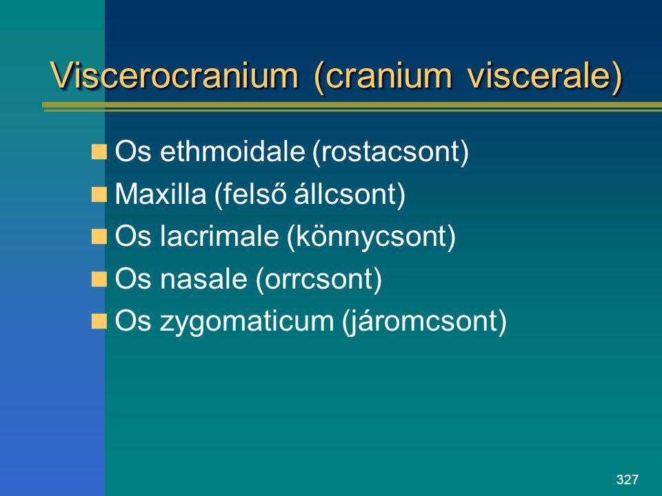 327 Viscerocranium (cranium viscerale) Os ethmoidale (rostacsont) Maxilla (felső állcsont) Os lacrimale (könnycsont) Os nasale (orrcsont) Os zygomatic