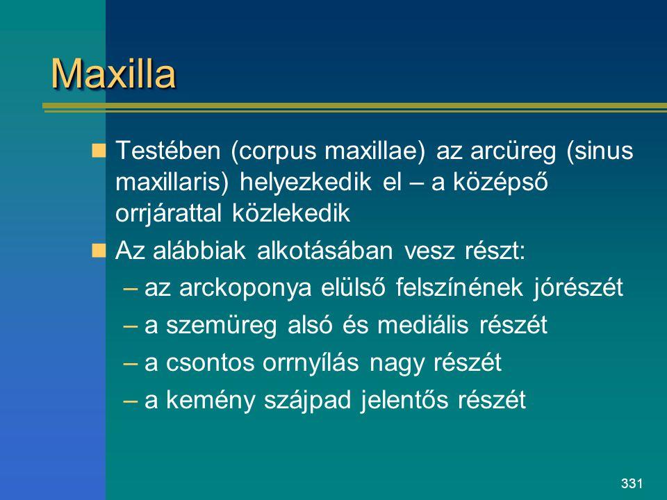 331 MaxillaMaxilla Testében (corpus maxillae) az arcüreg (sinus maxillaris) helyezkedik el – a középső orrjárattal közlekedik Az alábbiak alkotásában