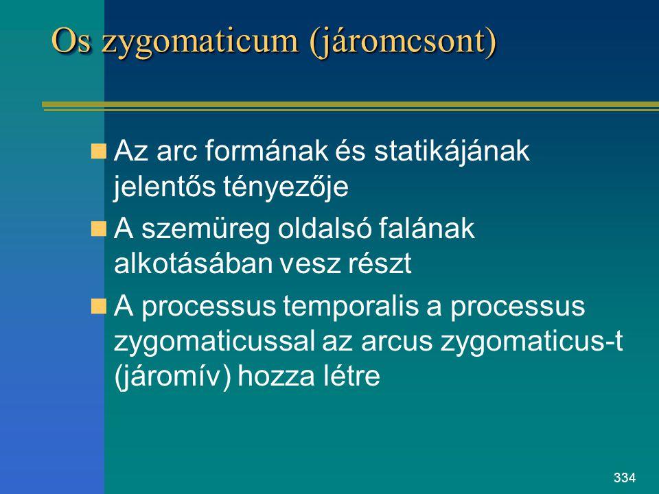334 Os zygomaticum (járomcsont) Az arc formának és statikájának jelentős tényezője A szemüreg oldalsó falának alkotásában vesz részt A processus tempo