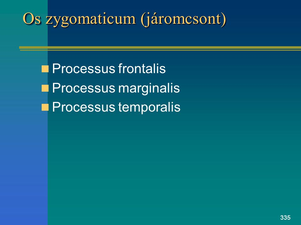 335 Os zygomaticum (járomcsont) Processus frontalis Processus marginalis Processus temporalis