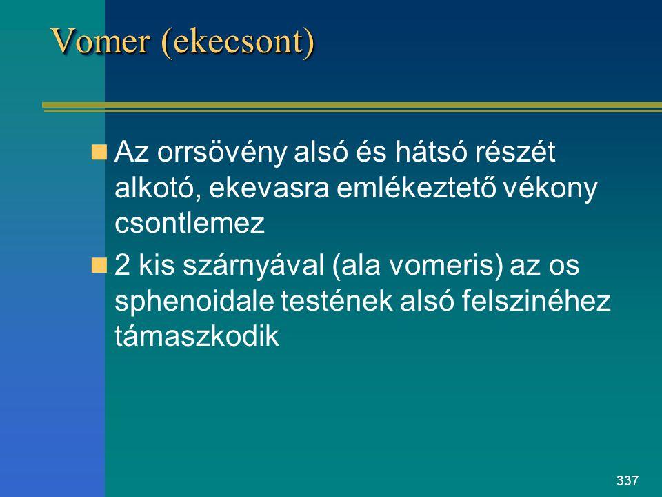 337 Vomer (ekecsont) Az orrsövény alsó és hátsó részét alkotó, ekevasra emlékeztető vékony csontlemez 2 kis szárnyával (ala vomeris) az os sphenoidale