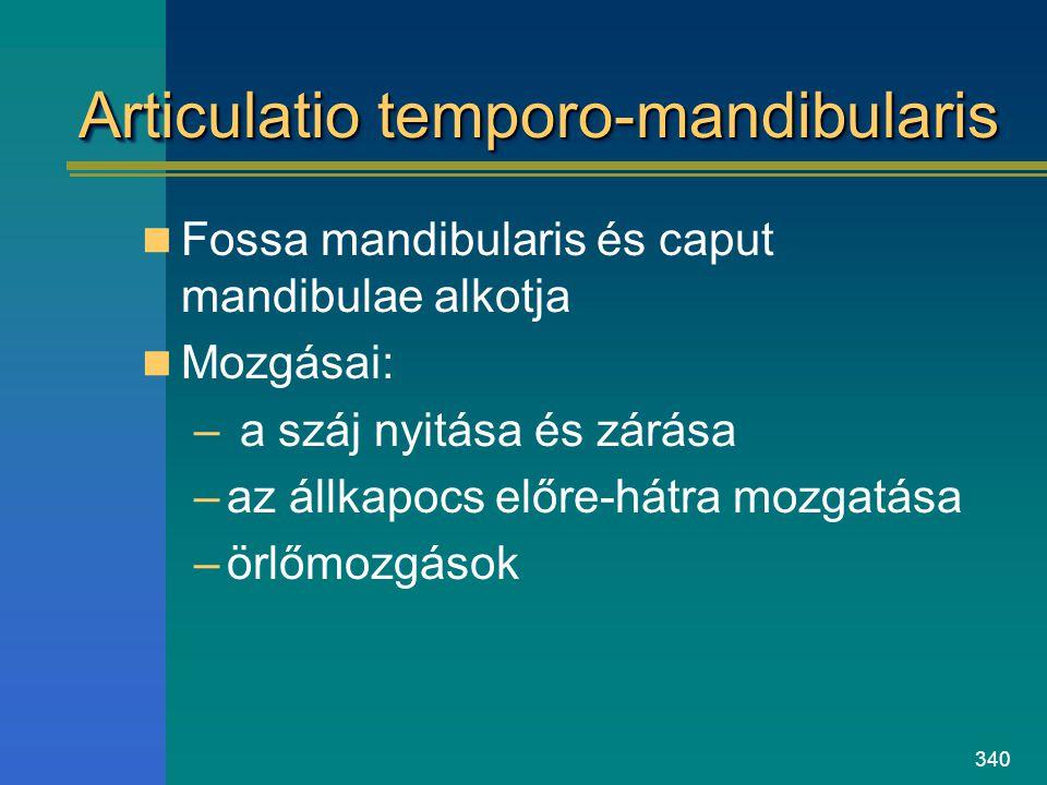 340 Articulatio temporo-mandibularis Fossa mandibularis és caput mandibulae alkotja Mozgásai: – a száj nyitása és zárása –az állkapocs előre-hátra moz