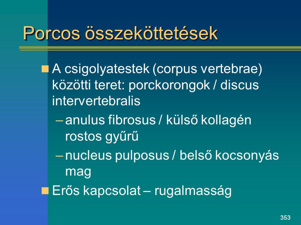 353 Porcos összeköttetések A csigolyatestek (corpus vertebrae) közötti teret: porckorongok / discus intervertebralis –anulus fibrosus / külső kollagén