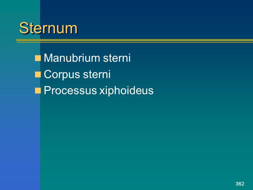 362 SternumSternum Manubrium sterni Corpus sterni Processus xiphoideus
