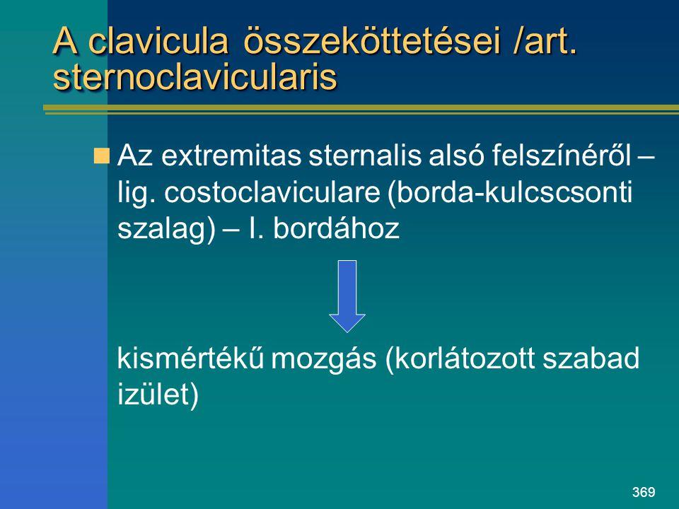 369 A clavicula összeköttetései /art. sternoclavicularis Az extremitas sternalis alsó felszínéről – lig. costoclaviculare (borda-kulcscsonti szalag) –