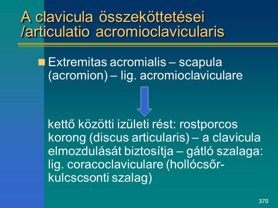370 A clavicula összeköttetései /articulatio acromioclavicularis Extremitas acromialis – scapula (acromion) – lig. acromioclaviculare kettő közötti iz