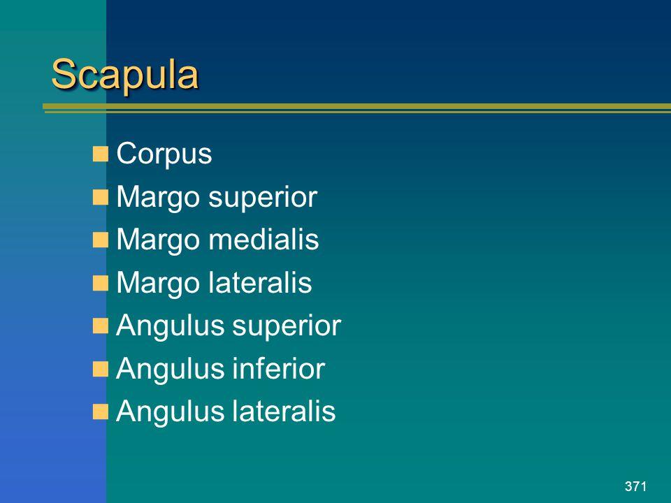 371 ScapulaScapula Corpus Margo superior Margo medialis Margo lateralis Angulus superior Angulus inferior Angulus lateralis