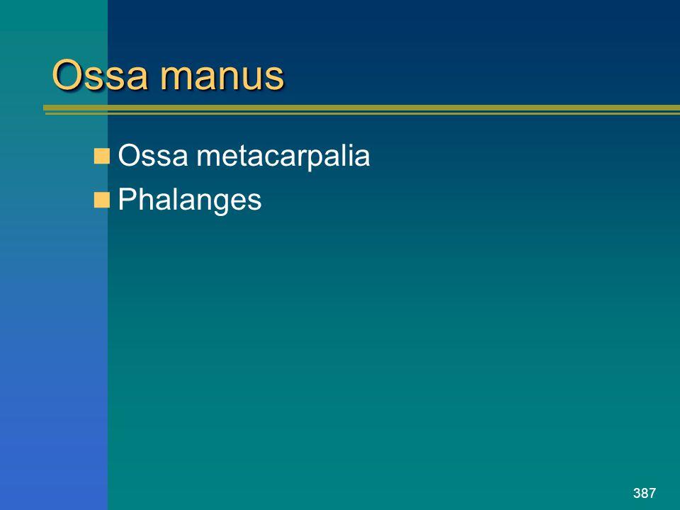 387 Ossa manus Ossa metacarpalia Phalanges