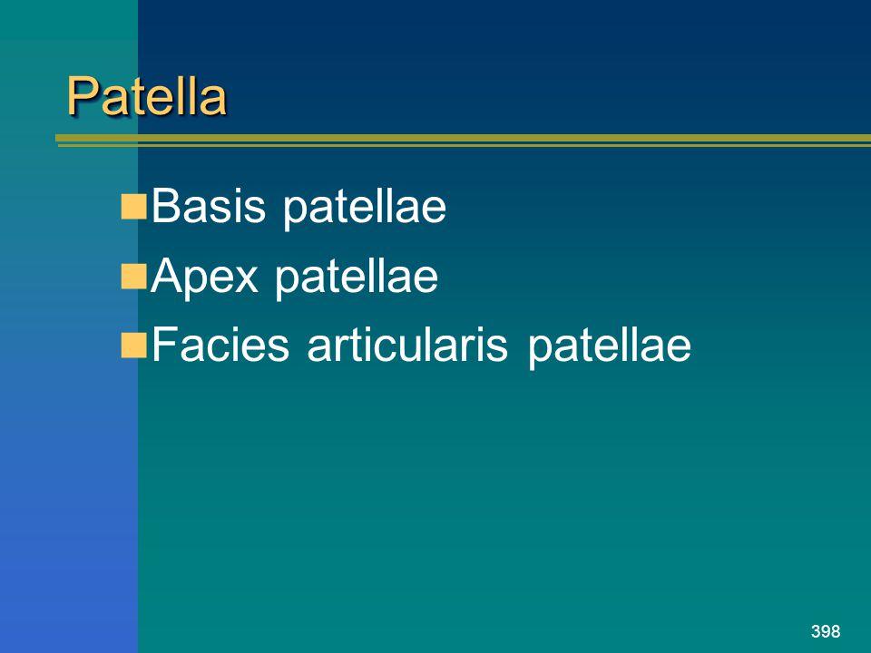398 PatellaPatella Basis patellae Apex patellae Facies articularis patellae