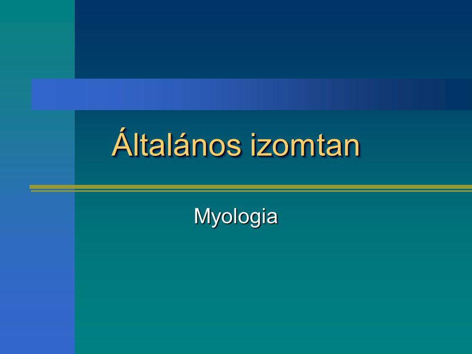 Általános izomtan Myologia
