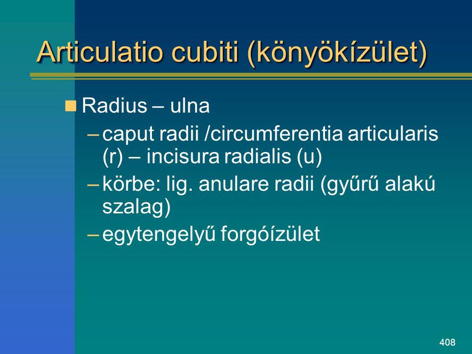 408 Articulatio cubiti (könyökízület) Radius – ulna –caput radii /circumferentia articularis (r) – incisura radialis (u) –körbe: lig. anulare radii (g