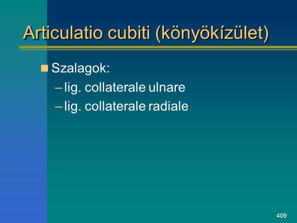 409 Articulatio cubiti (könyökízület) Szalagok: –lig. collaterale ulnare –lig. collaterale radiale