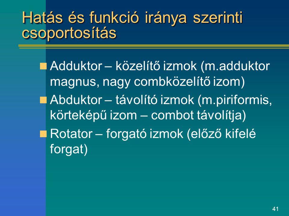 41 Hatás és funkció iránya szerinti csoportosítás Adduktor – közelítő izmok (m.adduktor magnus, nagy combközelítő izom) Abduktor – távolító izmok (m.p
