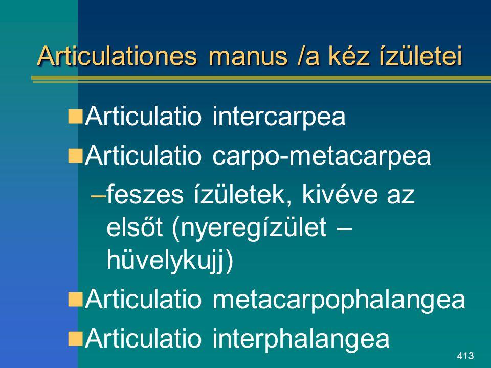 413 Articulationes manus /a kéz ízületei Articulatio intercarpea Articulatio carpo-metacarpea –feszes ízületek, kivéve az elsőt (nyeregízület – hüvely