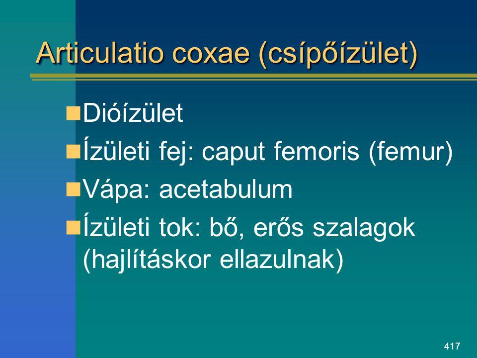 417 Articulatio coxae (csípőízület) Dióízület Ízületi fej: caput femoris (femur) Vápa: acetabulum Ízületi tok: bő, erős szalagok (hajlításkor ellazuln