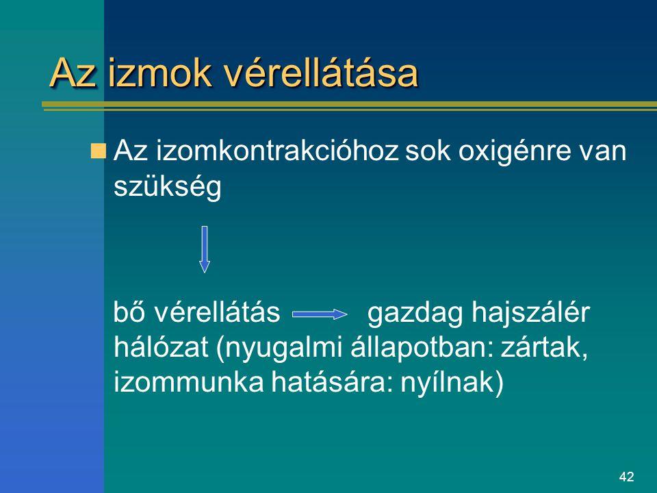42 Az izmok vérellátása Az izomkontrakcióhoz sok oxigénre van szükség bő vérellátás gazdag hajszálér hálózat (nyugalmi állapotban: zártak, izommunka h