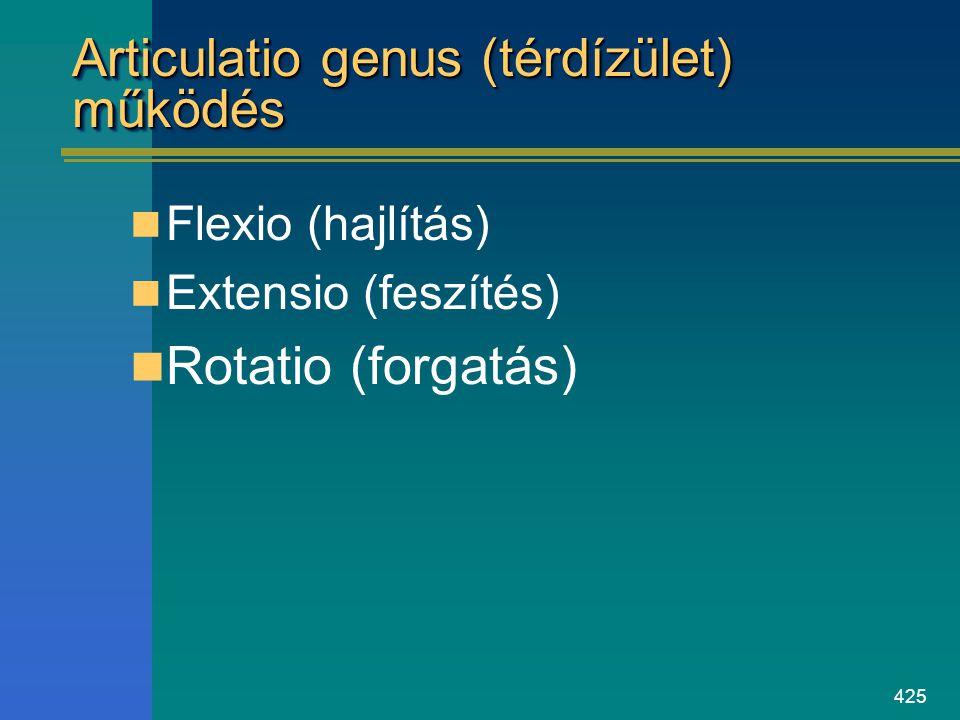 425 Articulatio genus (térdízület) működés Flexio (hajlítás) Extensio (feszítés) Rotatio (forgatás)