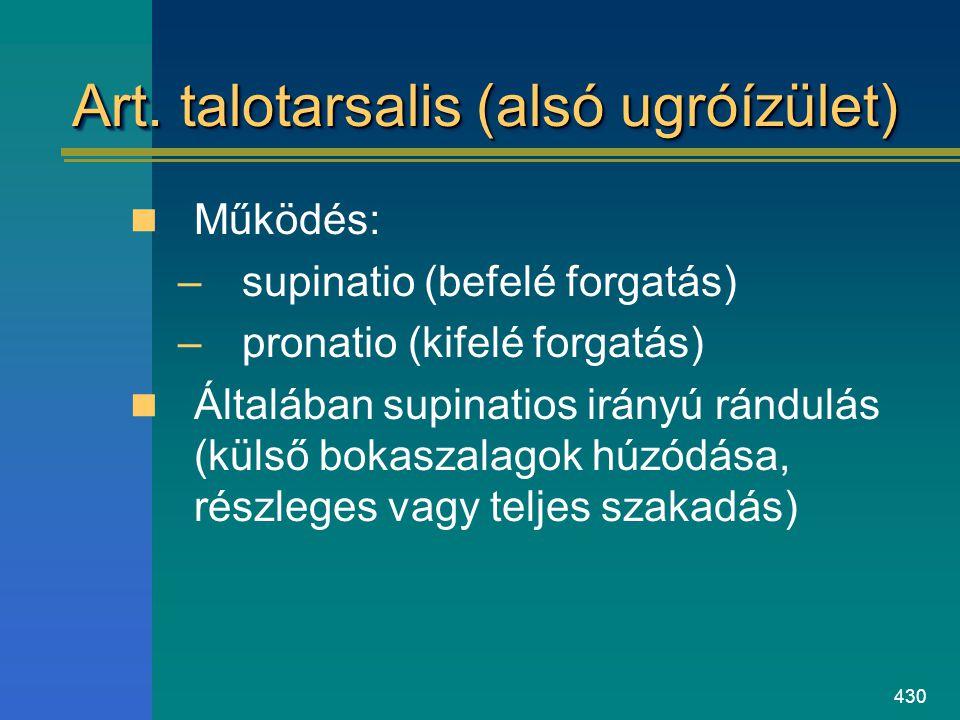 430 Art. talotarsalis (alsó ugróízület) Működés: –supinatio (befelé forgatás) –pronatio (kifelé forgatás) Általában supinatios irányú rándulás (külső