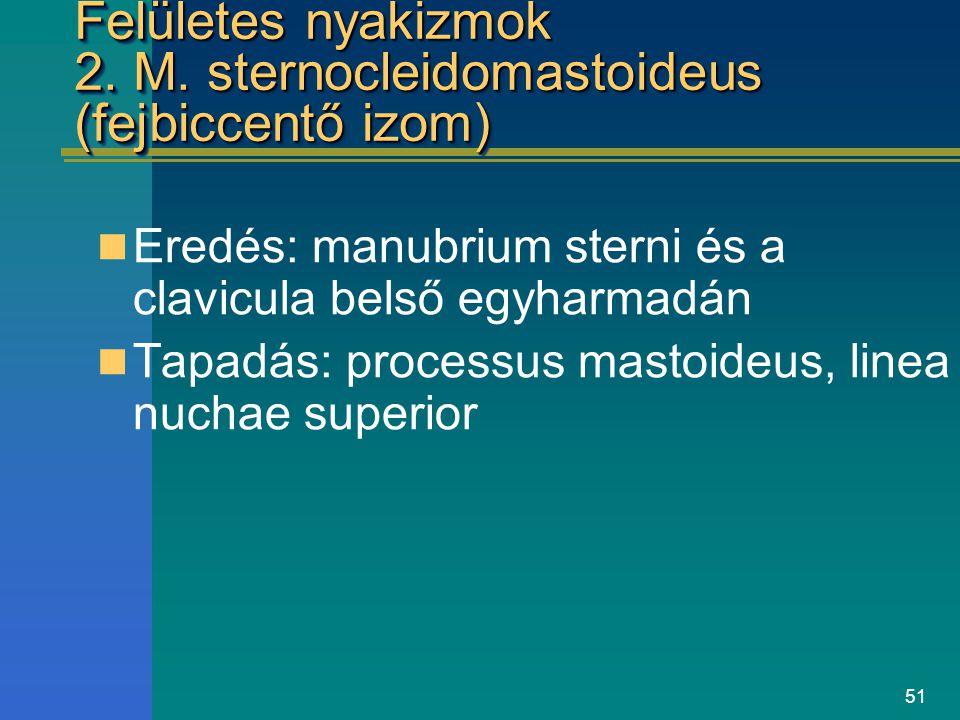 51 Felületes nyakizmok 2. M. sternocleidomastoideus (fejbiccentő izom) Eredés: manubrium sterni és a clavicula belső egyharmadán Tapadás: processus ma
