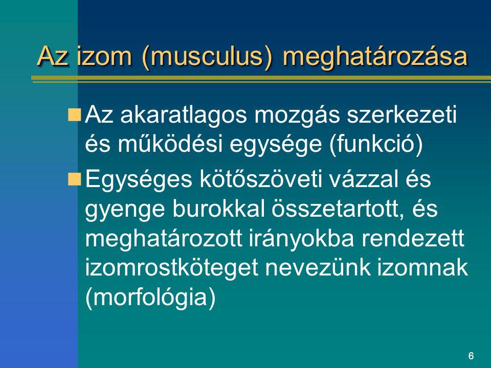 6 Az izom (musculus) meghatározása Az akaratlagos mozgás szerkezeti és működési egysége (funkció) Egységes kötőszöveti vázzal és gyenge burokkal össze