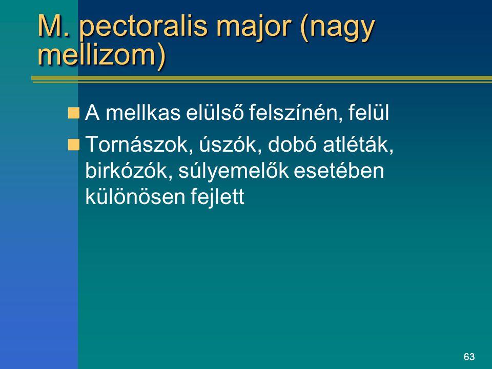 63 M. pectoralis major (nagy mellizom) A mellkas elülső felszínén, felül Tornászok, úszók, dobó atléták, birkózók, súlyemelők esetében különösen fejle