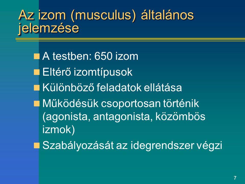 7 Az izom (musculus) általános jelemzése A testben: 650 izom Eltérő izomtípusok Különböző feladatok ellátása Működésük csoportosan történik (agonista,