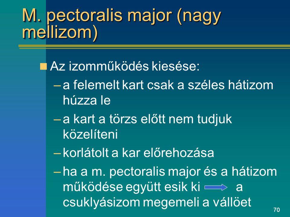 70 M. pectoralis major (nagy mellizom) Az izomműködés kiesése: –a felemelt kart csak a széles hátizom húzza le –a kart a törzs előtt nem tudjuk közelí