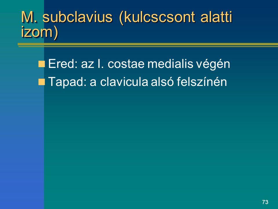 73 M. subclavius (kulcscsont alatti izom) Ered: az I. costae medialis végén Tapad: a clavicula alsó felszínén
