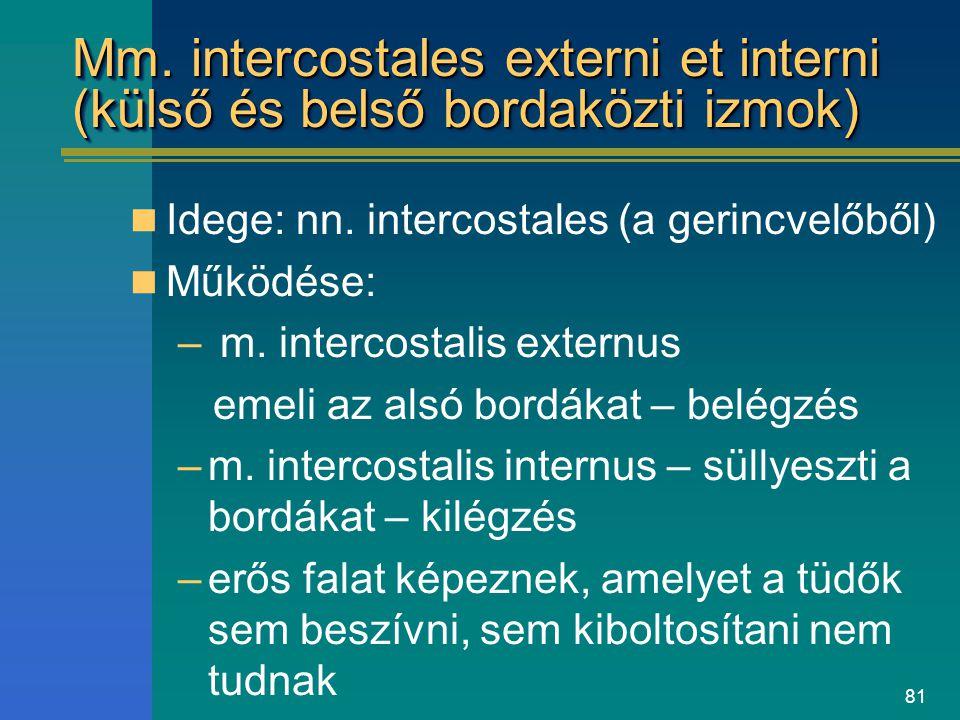 81 Mm. intercostales externi et interni (külső és belső bordaközti izmok) Idege: nn. intercostales (a gerincvelőből) Működése: – m. intercostalis exte