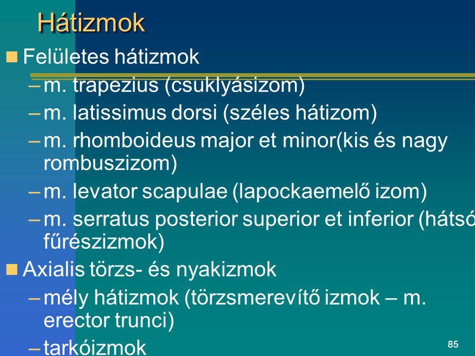 85 HátizmokHátizmok Felületes hátizmok –m. trapezius (csuklyásizom) –m. latissimus dorsi (széles hátizom) –m. rhomboideus major et minor(kis és nagy r
