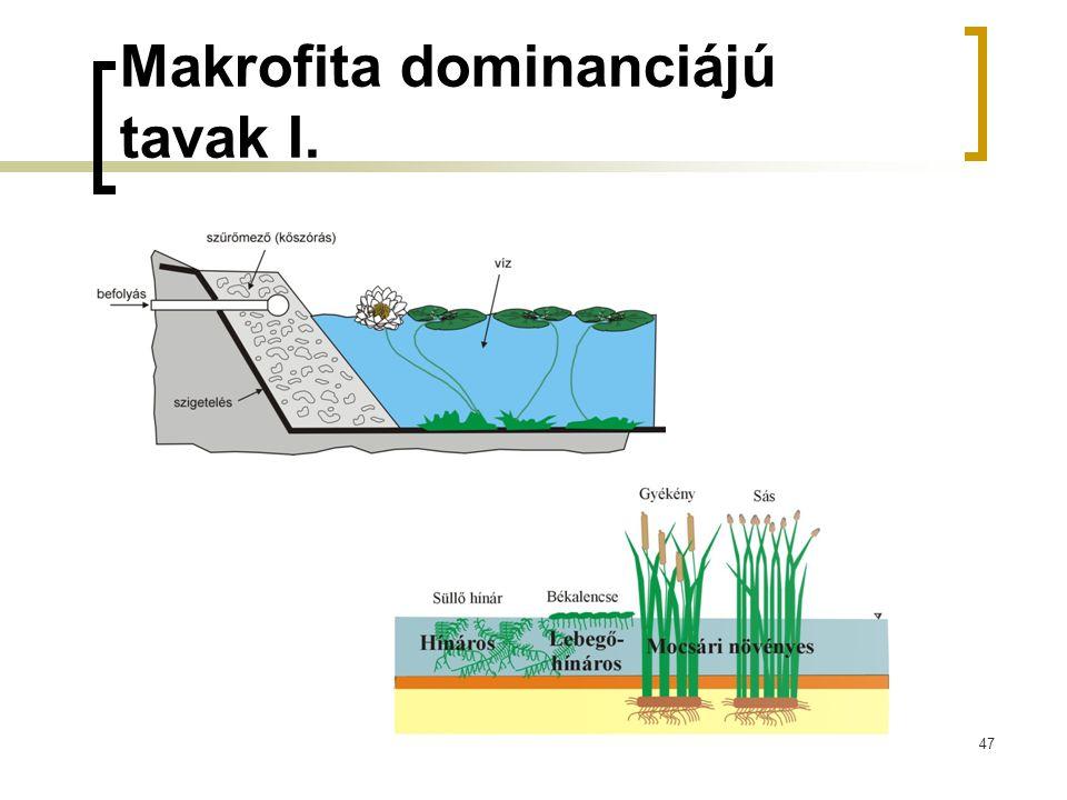 47 Makrofita dominanciájú tavak I.