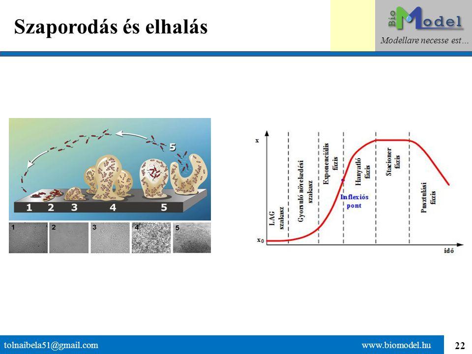 22 Szaporodás és elhalás tolnaibela51@gmail.com www.biomodel.hu Modellare necesse est…