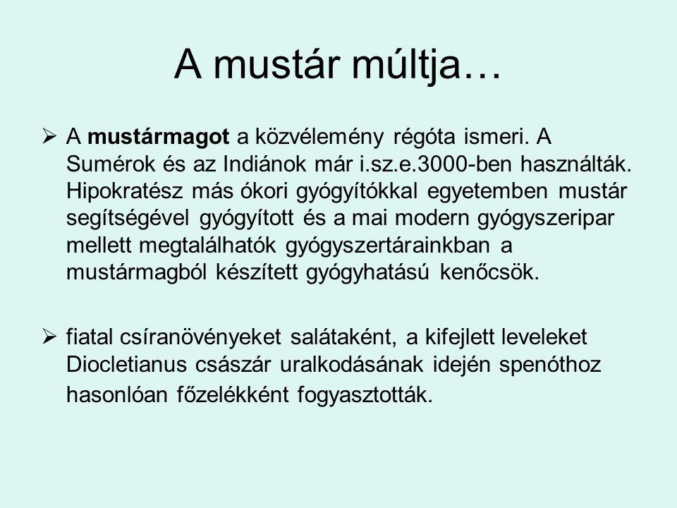 Jelentősége Hazánkban a fehér mustár (Sinapsis alba) Fekete mustár (Brassica nigra) Száreptai mustár (Brassica juncea) Abesszin mustárnak (Brassica carinata) van jelentősége.