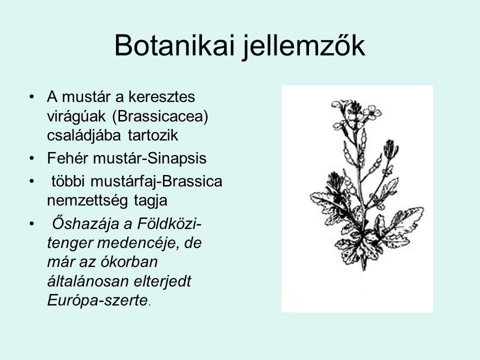Botanikai jellemzők A mustár a keresztes virágúak (Brassicacea) családjába tartozik Fehér mustár-Sinapsis többi mustárfaj-Brassica nemzettség tagja Ős