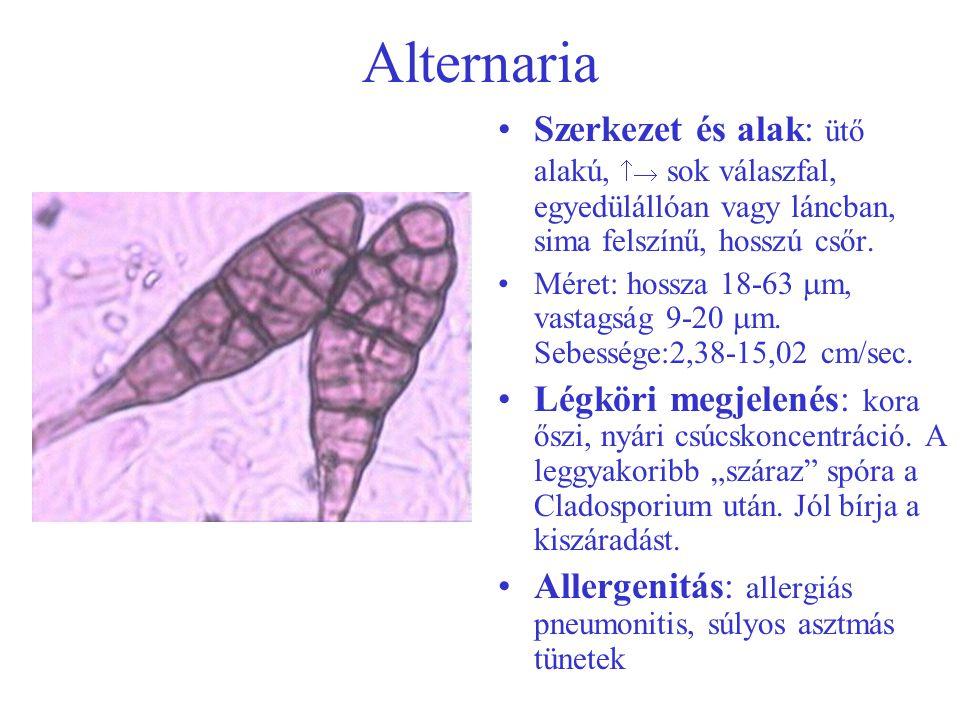 Alternaria Szerkezet és alak: ütő alakú,  sok válaszfal, egyedülállóan vagy láncban, sima felszínű, hosszú csőr. Méret: hossza 18-63  m, vastagság