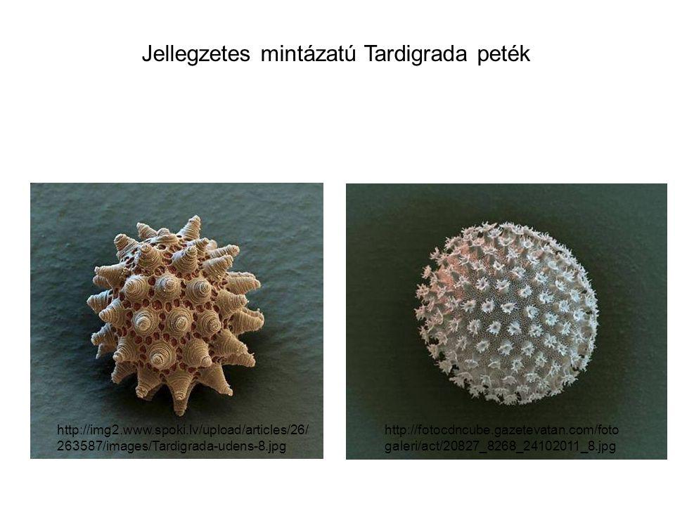 őslégcsöves – Peripatus sp. http://www.kingsnake.com/westindian/peripatussp2.JPG