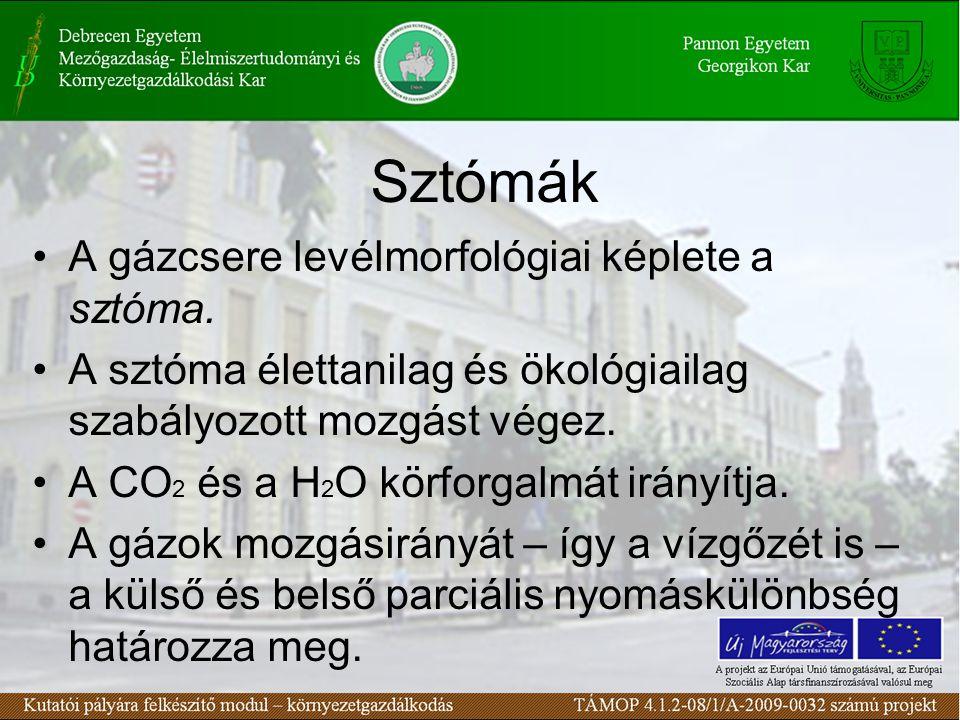 Sztómák A gázcsere levélmorfológiai képlete a sztóma. A sztóma élettanilag és ökológiailag szabályozott mozgást végez. A CO 2 és a H 2 O körforgalmát