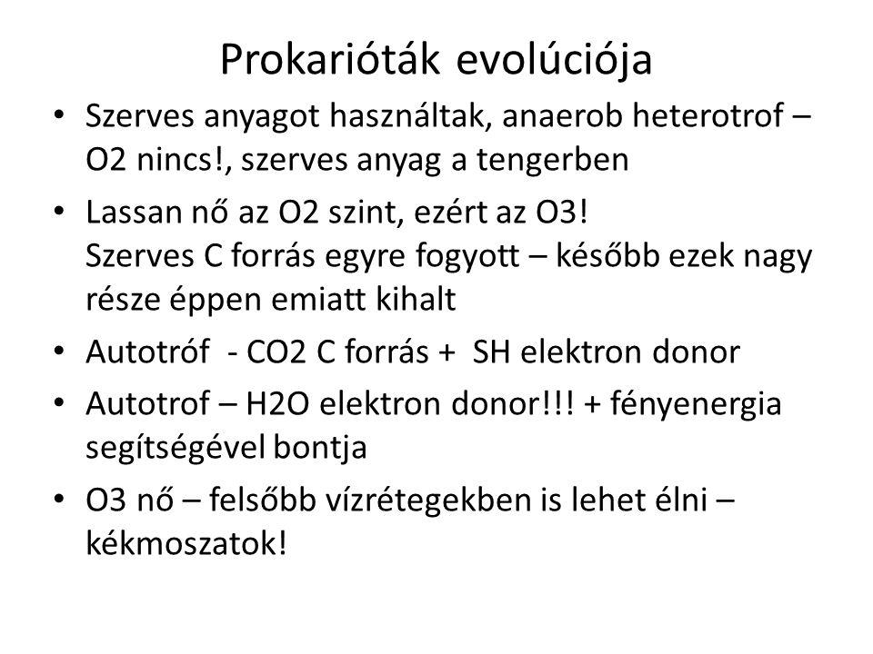 Prokarióták evolúciója Szerves anyagot használtak, anaerob heterotrof – O2 nincs!, szerves anyag a tengerben Lassan nő az O2 szint, ezért az O3! Szerv