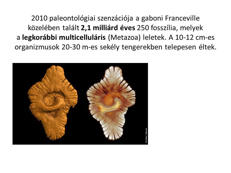 2010 paleontológiai szenzációja a gaboni Franceville közelében talált 2,1 milliárd éves 250 fosszília, melyek a legkorábbi multicelluláris (Metazoa) l
