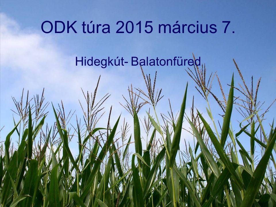 ODK túra 2015 március 7. Hidegkút- Balatonfüred