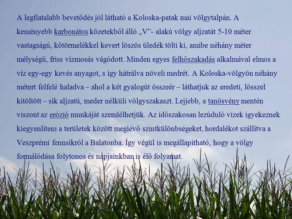 """A legfiatalabb bevetődés jól látható a Koloska-patak mai völgytalpán. A keményebb karbonátos kőzetekből álló """"V""""- alakú völgy aljzatát 5-10 méter vast"""