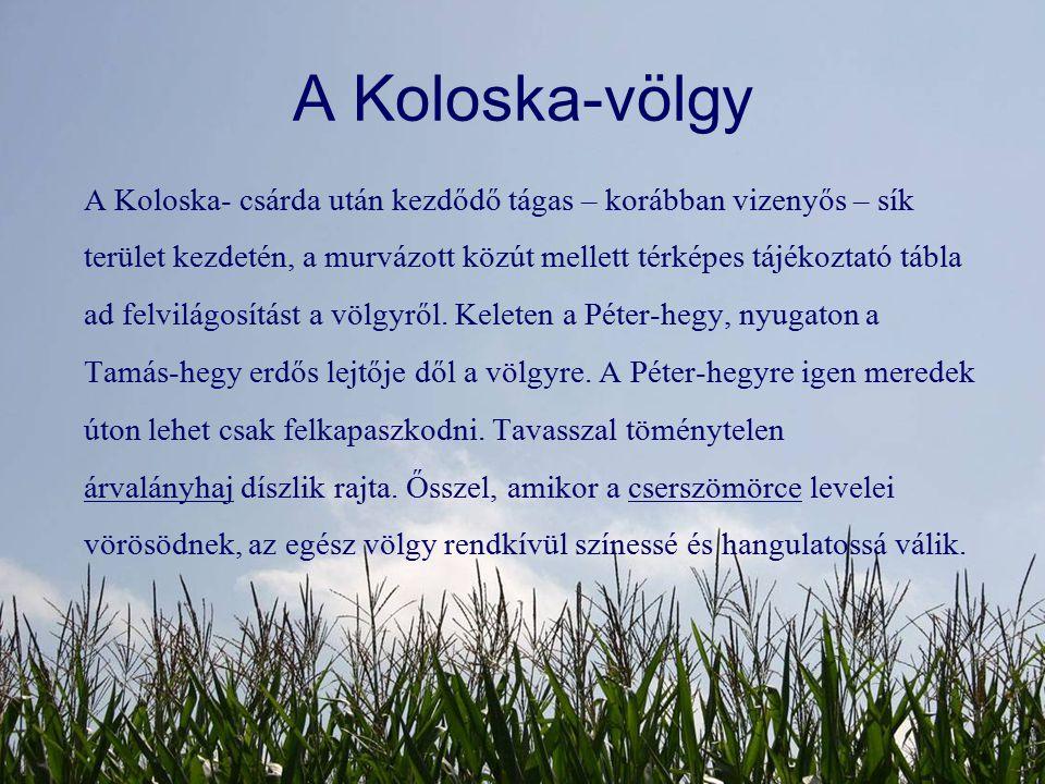 A Koloska-völgy A Koloska- csárda után kezdődő tágas – korábban vizenyős – sík terület kezdetén, a murvázott közút mellett térképes tájékoztató tábla