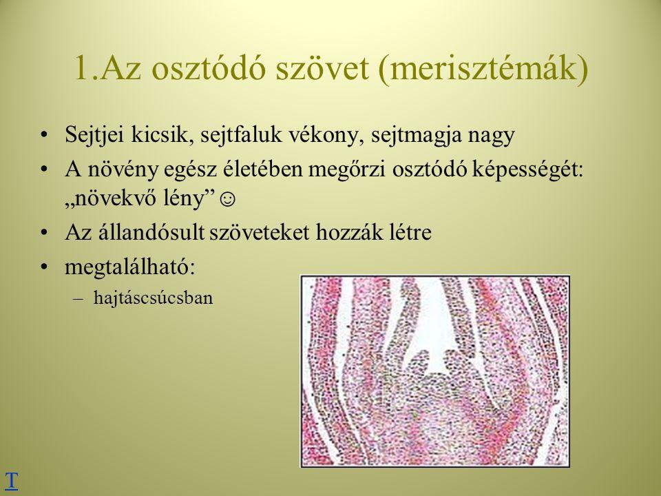 """1.Az osztódó szövet (merisztémák) Sejtjei kicsik, sejtfaluk vékony, sejtmagja nagy A növény egész életében megőrzi osztódó képességét: """"növekvő lény""""☺"""