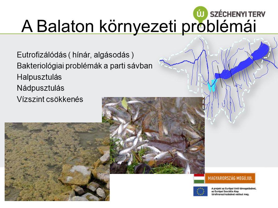 A Balaton környezeti problémái Eutrofizálódás ( hínár, algásodás ) Bakteriológiai problémák a parti sávban Halpusztulás Nádpusztulás Vízszint csökkené