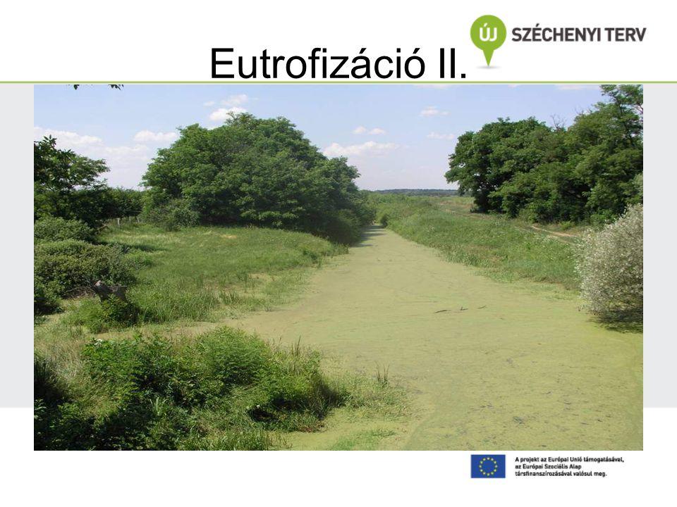 Eutrofizáció II.