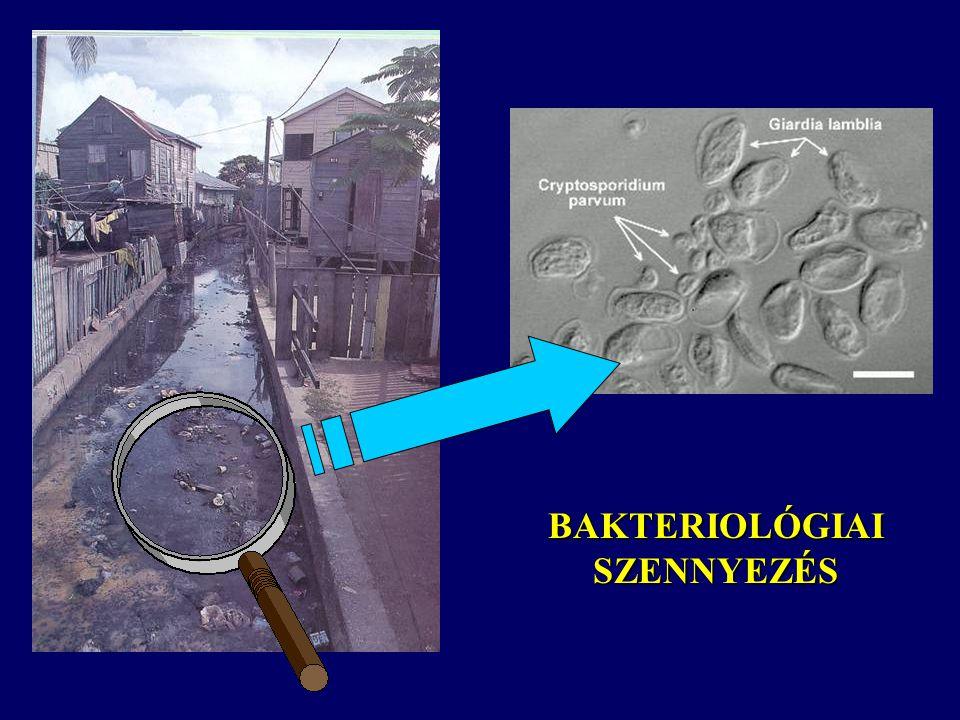 """Vírusok Gazdaszervezet nélkül nem képesek szaporodni, azt fertőzik Környezeti hatásoknak (pH, hőmérséklet, stb.) elég jól ellenállnak Vízben előfordulók: Enterális vírusok (spirális alakú paraziták, méretük 20-80 nm), Hepatitis A Patogén protozoák: """"új patogének (vízellátó rendszerekből származó járványok leggyakoribb okozói, véglények) Cryptosporidium (USA, 1987) Giardia lambdia (ostoros protozoa) Klasszikus víztisztításnak ellenállnak (vírusok is) Indikátorok hiányosságai Kockázat-szemlélet"""