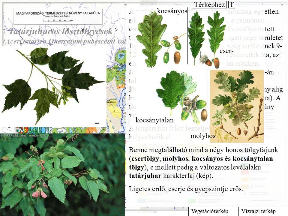 Vízrajzi térképVegetációtérkép 2. Tatárjuharos lösztölgyesek (Aceri tatarico-Quercetum pubescenti-roboris) A tatárjuharos lösztölgyes Magyarország egy