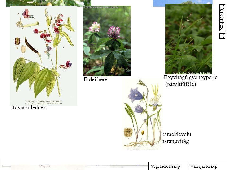 13. Cseres tölgyesek (Quercetum-petraeae-cerris) és egyéb savanyodó talajú tölgyesek (p/Potentillo-Quercetum, t/Tilio argenteae-Quercetum) A cseres tö
