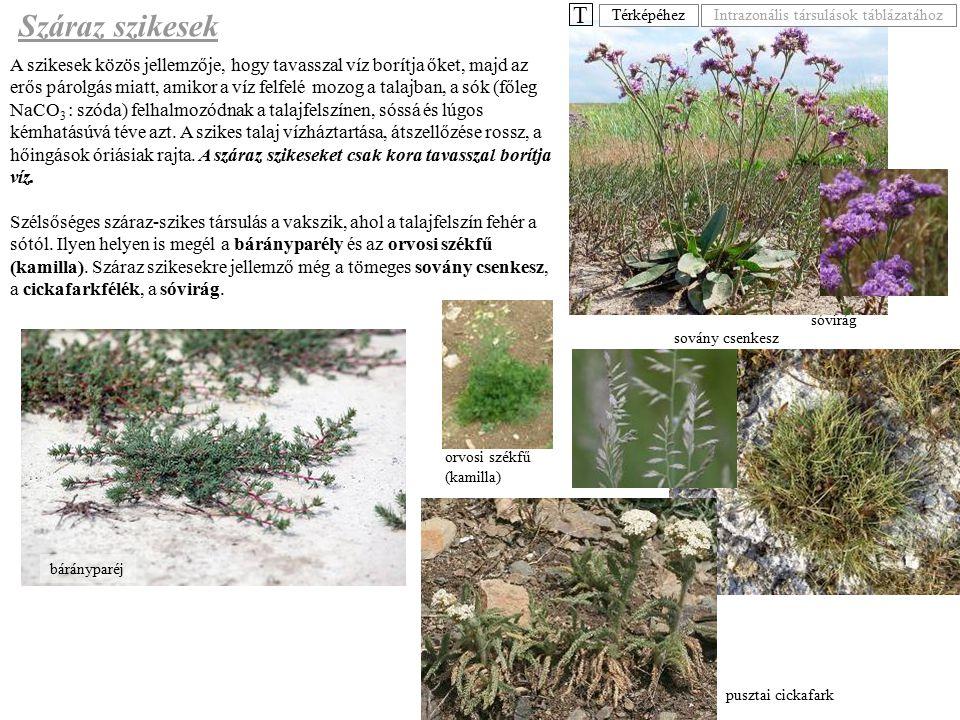 A szikesek közös jellemzője, hogy tavasszal víz borítja őket, majd az erős párolgás miatt, amikor a víz felfelé mozog a talajban, a sók (főleg NaCO 3